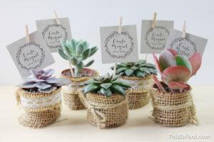 plantas regalo invitados boda detalle invitados bodas sevilla essencia novias cactus bodas